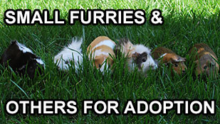 Small furries & others for adoption